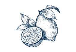 Drawing of fruit